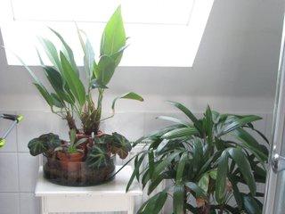 Plantes vertes sous une fenêtre de toit