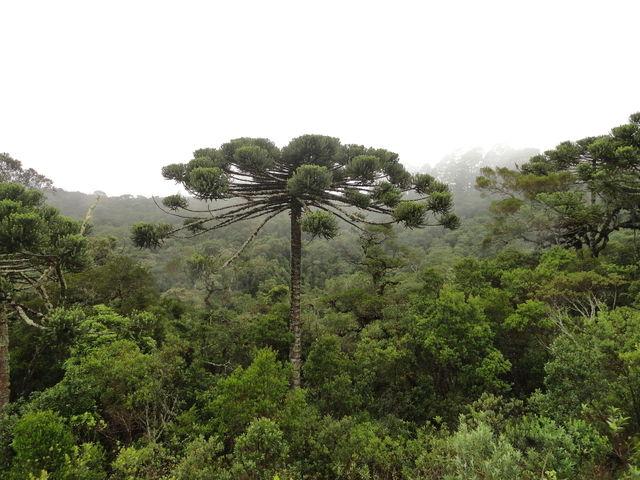 Plantes fossiles : qui sont ces végétaux préhistoriques ?