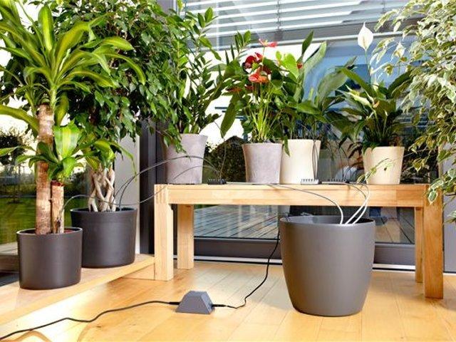 plante interieur design perfect pot mural pour plante interieur idaces pour cracer un petit. Black Bedroom Furniture Sets. Home Design Ideas