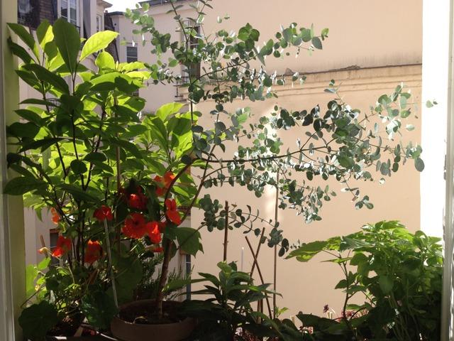 jardiner en ville planter sur les rebords de fen tres. Black Bedroom Furniture Sets. Home Design Ideas