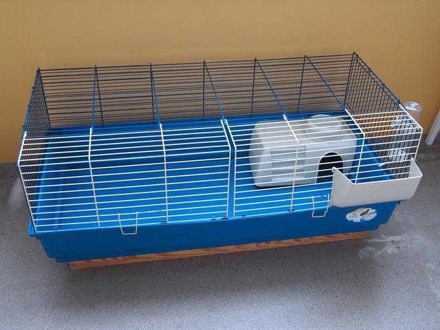 le cochon d 39 inde un animal parfait pour les enfants. Black Bedroom Furniture Sets. Home Design Ideas