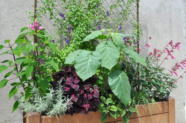 une jardini re estivale pour d corer un mur. Black Bedroom Furniture Sets. Home Design Ideas