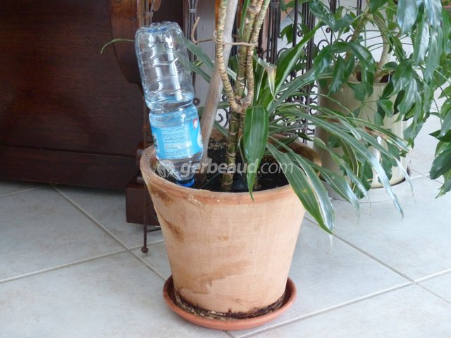 Plantes vertes entretien pendant les vacances for Arrosage plante interieur
