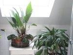 Les plantes vertes en vacances