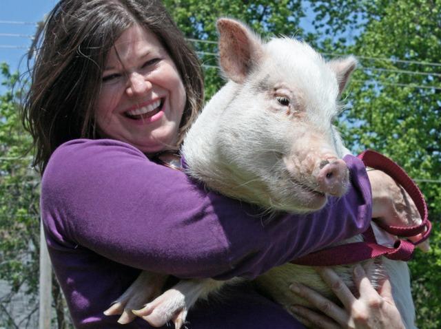 Elever un cochon nain : ce qu'il faut savoir