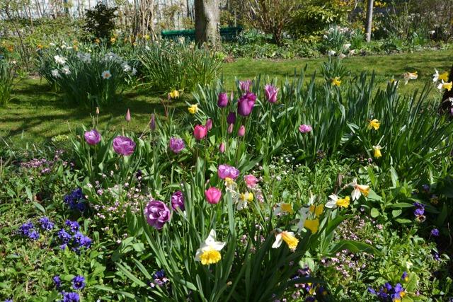 Giverny au printemps  (Le jardin de Monet à Giverny)