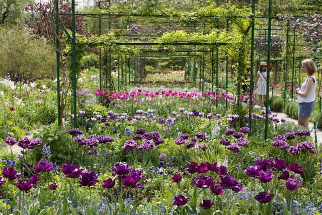 Tulipes, fin mai
