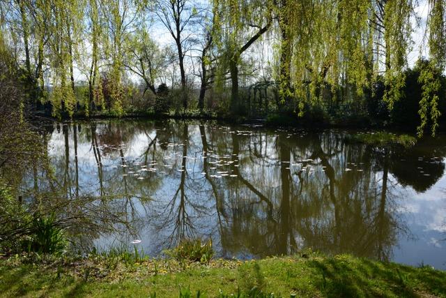 L'étang des nymphéas, en avril (Le jardin de Monet à Giverny)