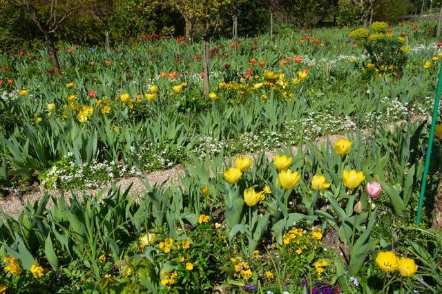 Un jardin comme un tableau impressionniste (Le jardin de Monet à Giverny)