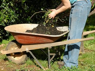 Criblage de terre dans une brouette
