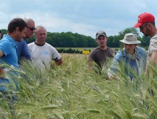 Observation d'une parcelle agricole