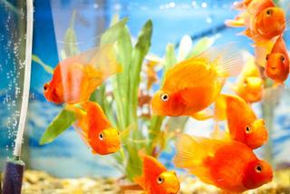 Aquarium avec filtre