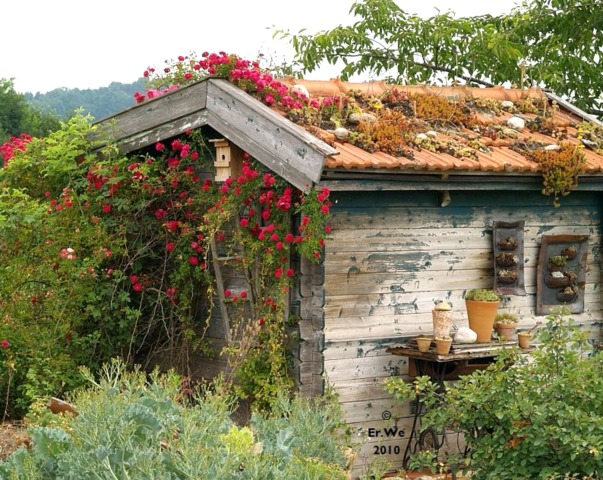 Plantes grasses sur le toit