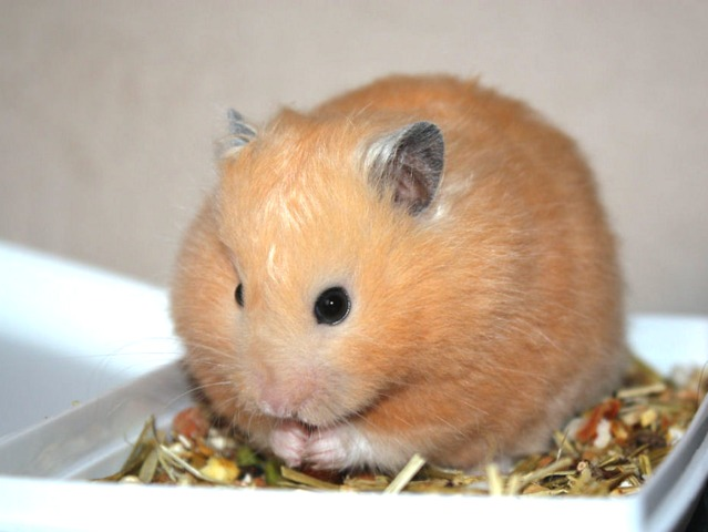Hamster Com Free