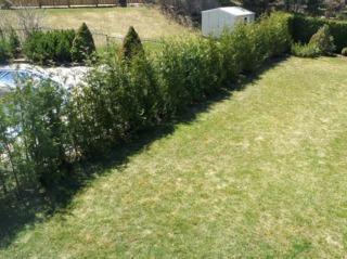 Une haie d'arbustes qui poussent vite : espèces à croissance rapide
