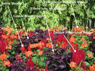 Massif rouge : les 5 plantes