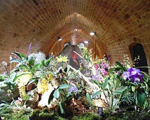 Orchidées à Fontfroide : exposition-vente internationale