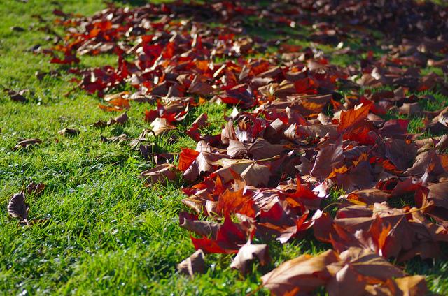 Ramassage et utilisation des feuilles mortes au jardin