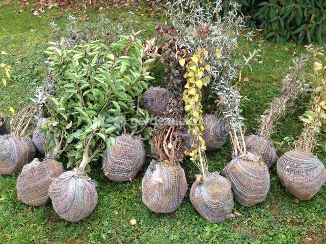 Une haie d\'arbustes qui poussent vite : espèces à croissance ...