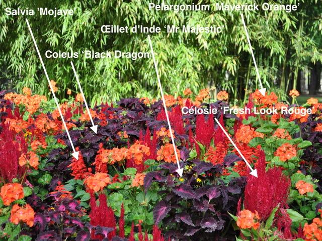 un massif rouge pour l'été et l'automne