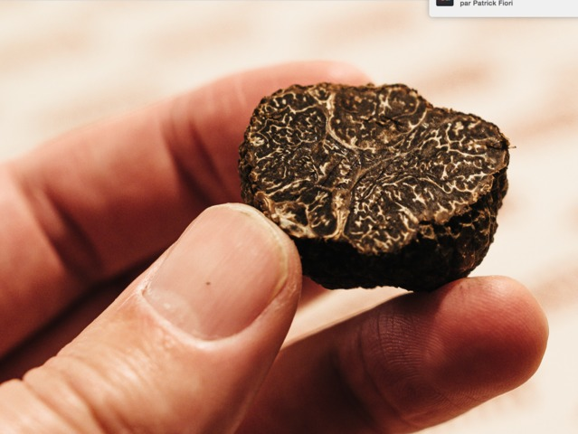truffes et arbres truffiers : où planter des arbres à truffes ?