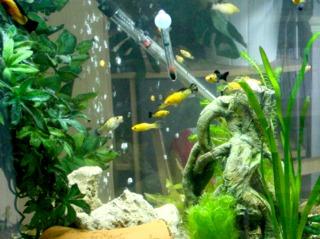 Aquarium chauffé et éclairé