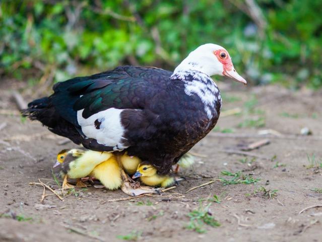 D coration bassin pour canard 87 rennes bassin pour for Decoration canard