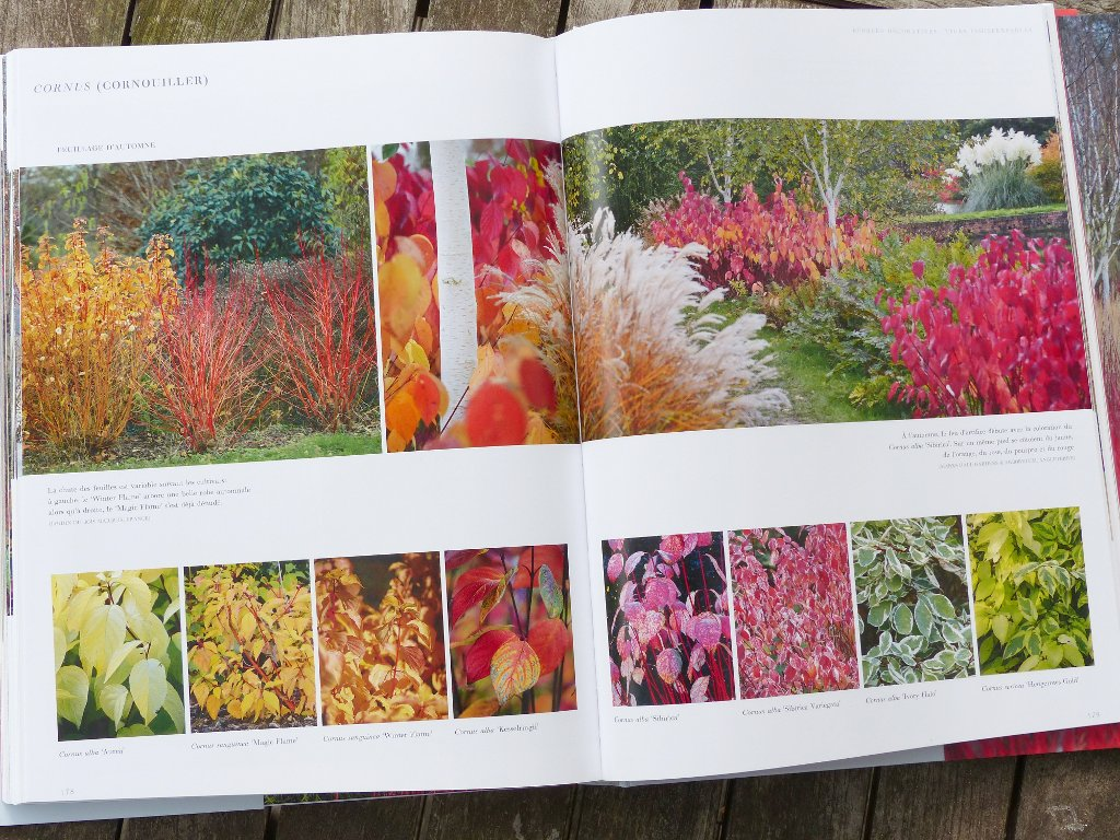 jardins d 39 hiver une saison r invent e livre de c dric pollet. Black Bedroom Furniture Sets. Home Design Ideas