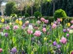 Un massif facile pour le printemps