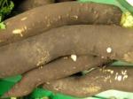Radis noir : semis, culture et récolte
