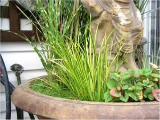 Acorus gramineus dans un mini-bassin