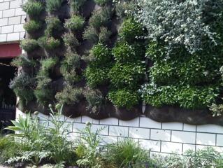 Mur végétalisé : plantation en alvéoles