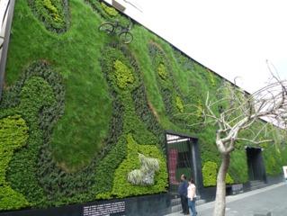 Mur végétalisé à Mexico