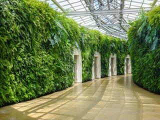 Mur végétalisé en intérieur, composé de fougères