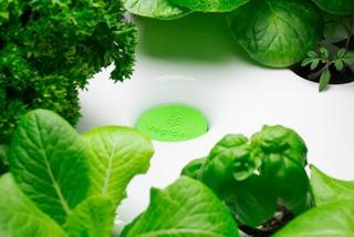 Vegidair : cartouche de plante