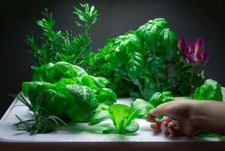Plantes cultivées dans un Vegidair