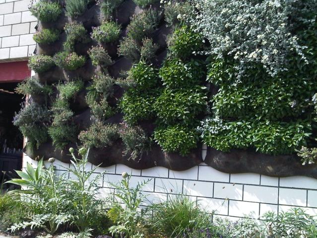 D couvrez les murs v g talis s installation plantes for Mur vegetal exterieur quelles plantes