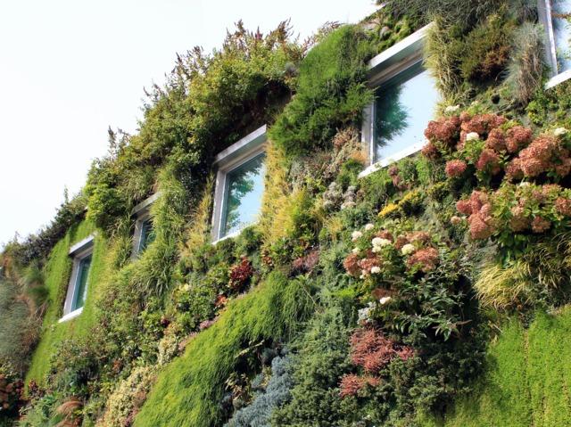 Découvrez les murs végétalisés : installation, plantes...