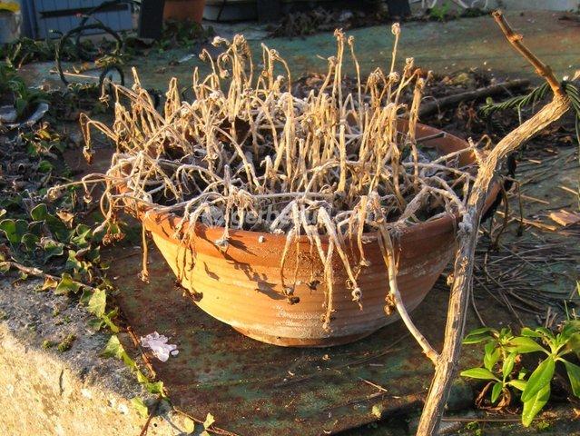 Que faire des plantes après le gel ?