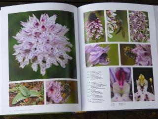 Orchidées d'Europe