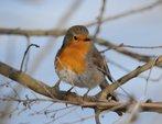 Les petits gestes pour les oiseaux en hiver