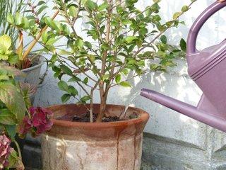 Arroser le jardin et les plantes en pot en hiver : les bons gestes