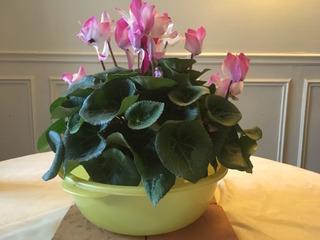 Bassinage  : comment bassiner une plante, pour quelles plantes ?