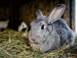 Alimentation des lapins : conseils pour bien les nourrir