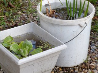 Hivernage de plantes aquatiques