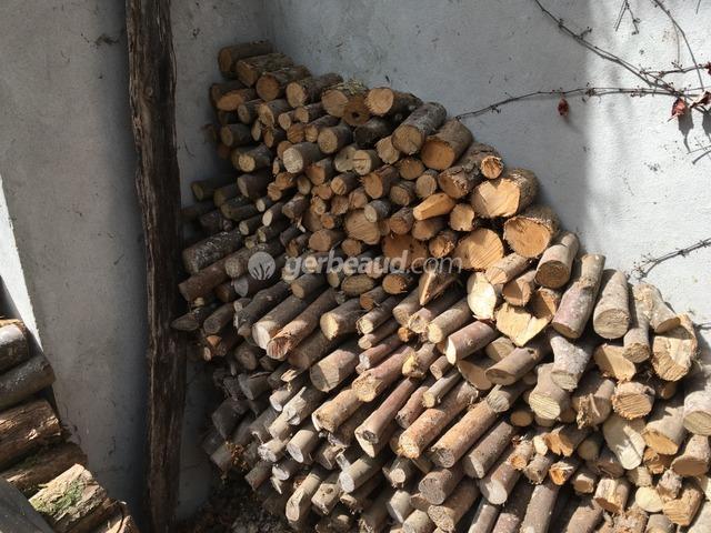 bois de chauffage : quelles essences d'arbres choisir ?
