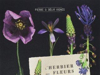 l'herbier des fleurs sauvages de nos régions - livre de pierre et
