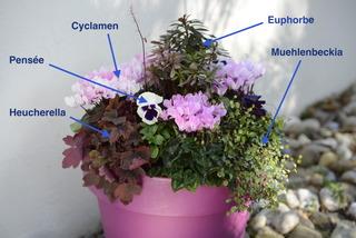 Potée fleurie pour l'hiver : les plantes