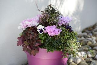 Potée fleurie pour l'hiver