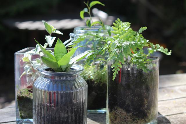 Terrariums miniatures (Jolis terrariums)